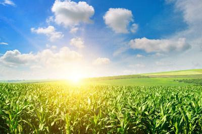 Univar Solutions anuncia su alianza con Dow para distribuir productos agrícolas de control de espuma a base de silicona en México